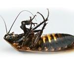 pest control cockroach