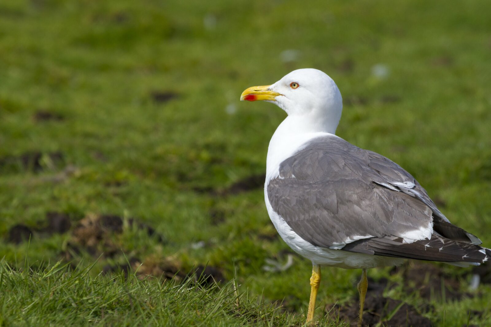 Birds Pest Infestation Problems - Youngs Pest Control
