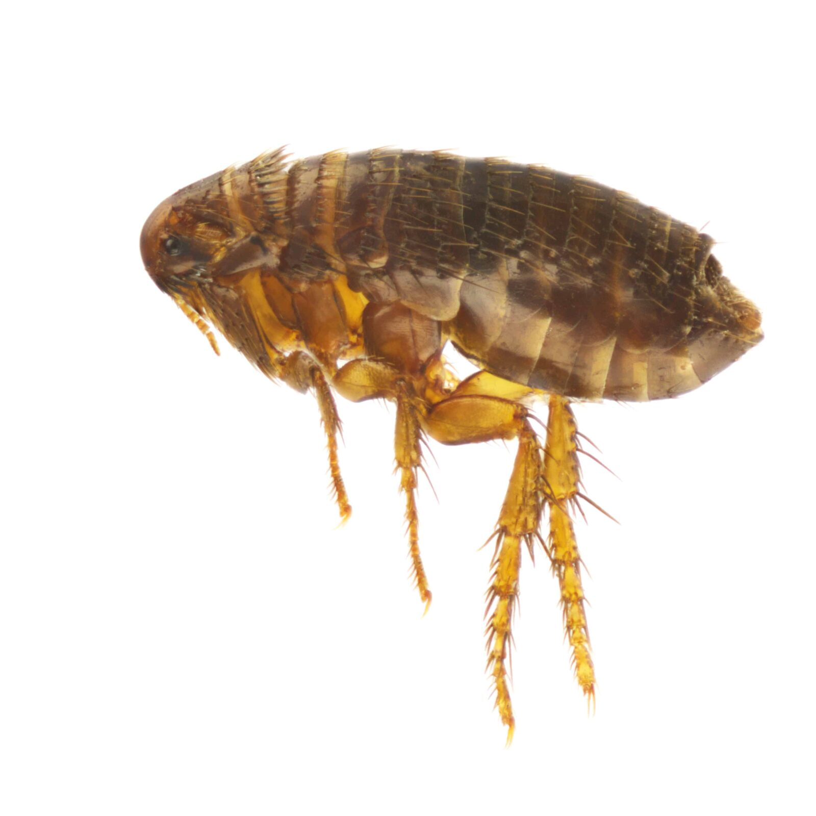 Animals And Insects From Which We Get Food