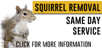 squirrel-control-info