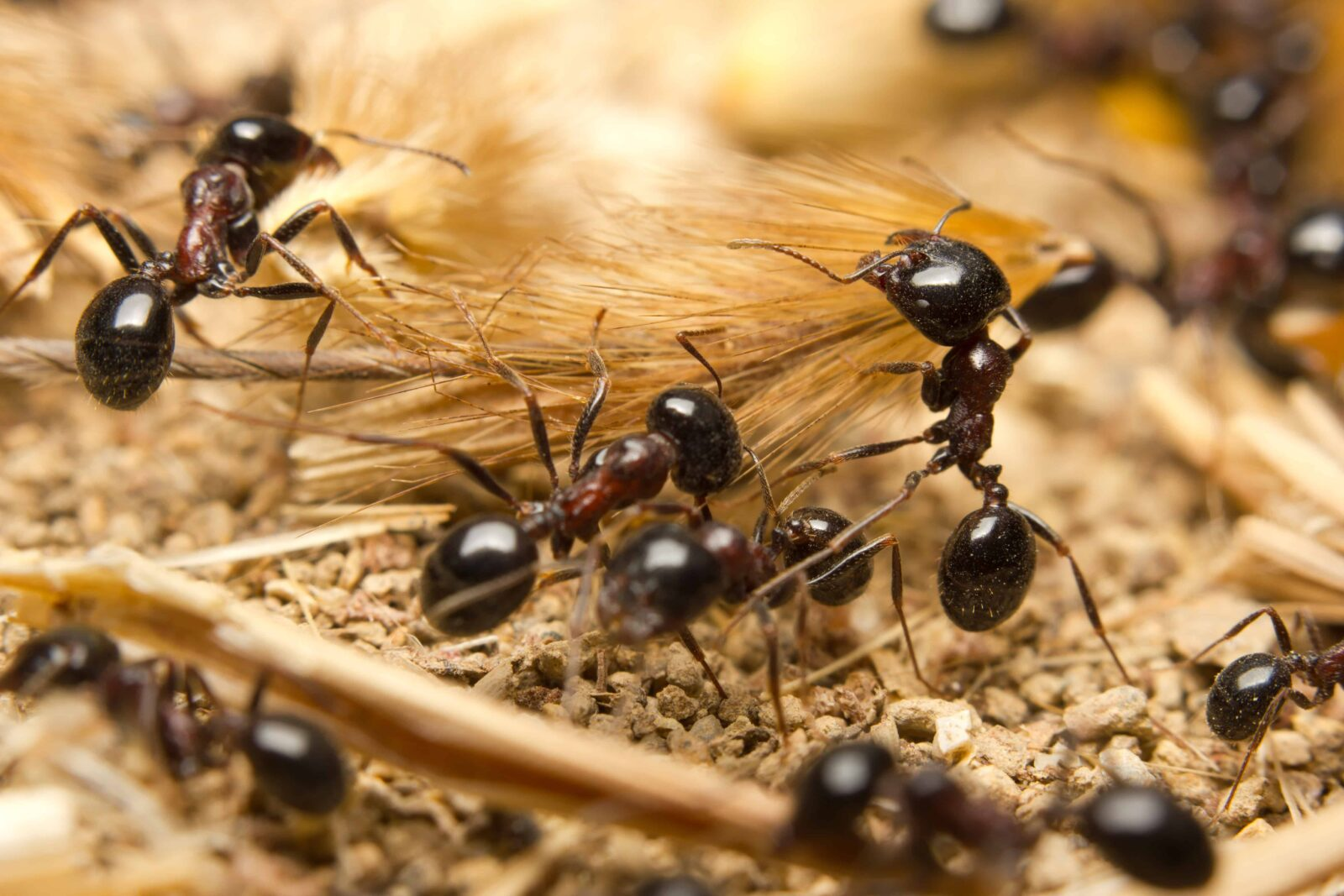 Professional Ant Control Makes Sense Youngs Pest Control