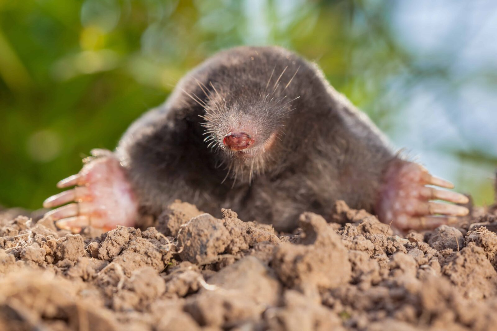 How to Keep Voles out of Your Yard  Make Your Best Home