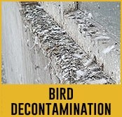 bird decontamination