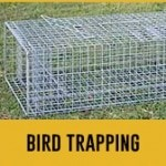 bird trapping