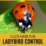 ladybird control