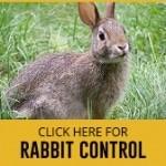 rabbit control