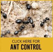 ant-thumbnail