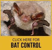 bat-thumbnail