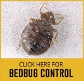 bedbug-thumbnail