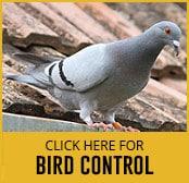 bird-thumbnail