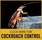 cockroach-thumbnail