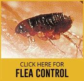 flea-thumbnail