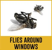 flies around windows