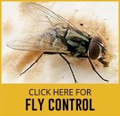 fly-thumbnail