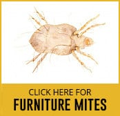 furniture-mite-thumbnail