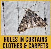 holes clothes curtains