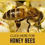 honey bee control