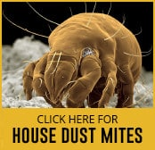 house-dust-mite-thumbnail