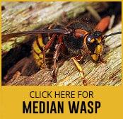 median-wasp-thumbnail