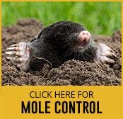 mole-thumbnail
