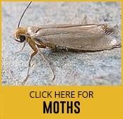 moths-thumbnail