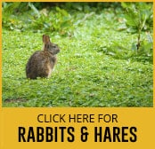 rabbit and hares