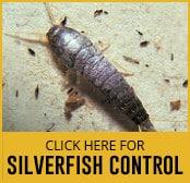 silverfish-thumbnail