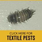 textile pests