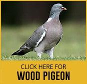 wood-pigeon-thumbnail