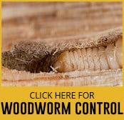 woodworm-thumbnail