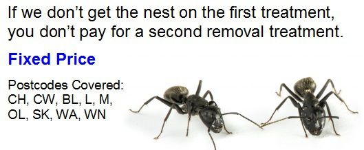 Ant nest removal price