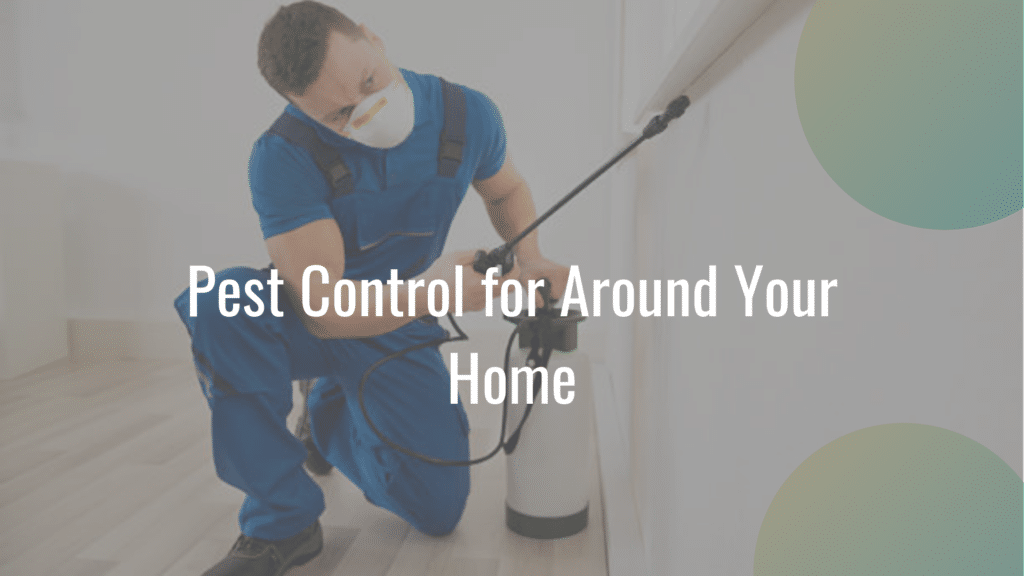 pest control in homes