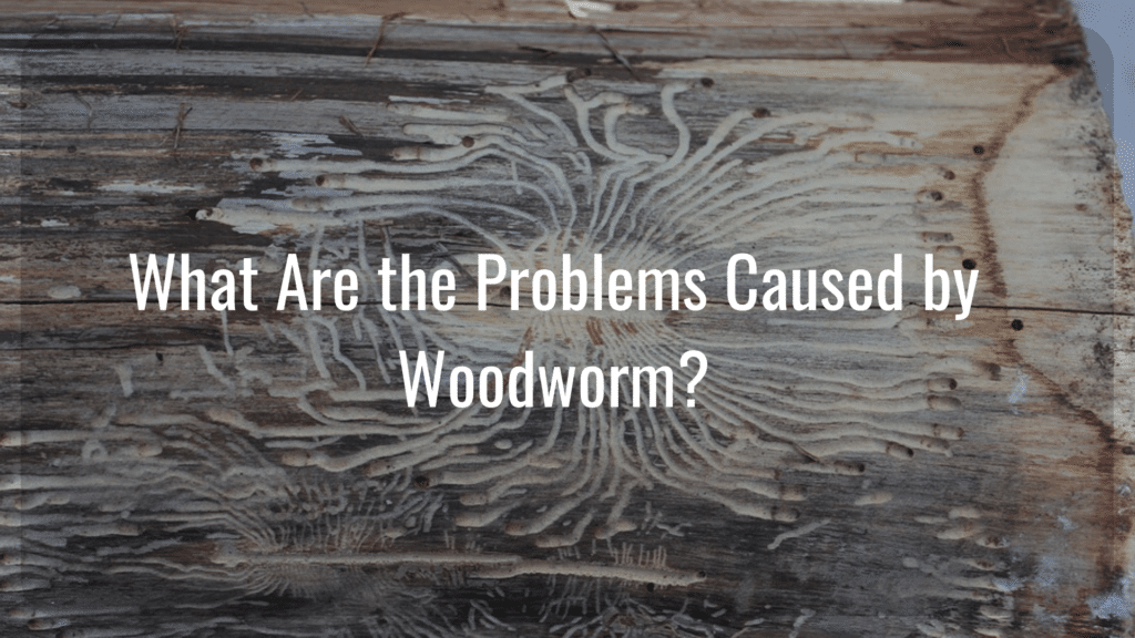 Woodworm Cause