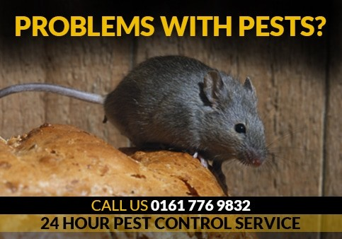 Rodent Control   Wasp Nest Removal   24 Hour Pest Removal