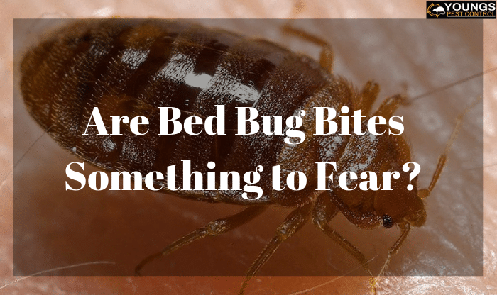 Are Bed Bug Bites Something to Fear