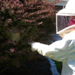Speke Wasp Nest Removal