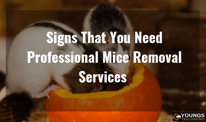 Signs That You Need Professional Mice Removal Services