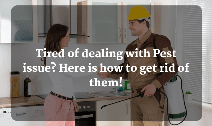 Ways to Get Rid of Pests Quickly