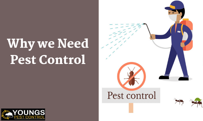 Why We Need Pest Control