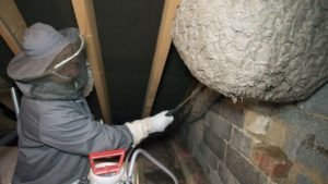 Wasp Nest Removal Experts