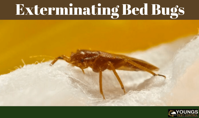 Exterminating Bed Bugs