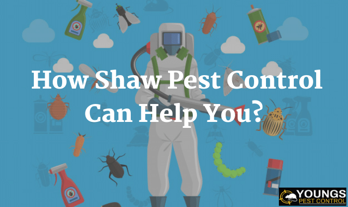 How Shaw Pest Control Can Help You