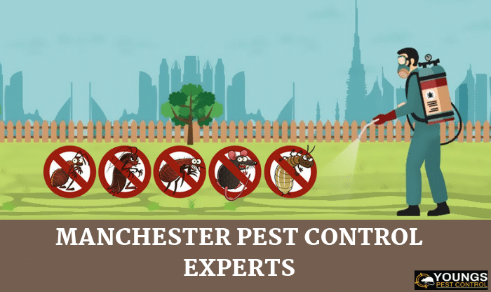 Manchester Pest Control Experts