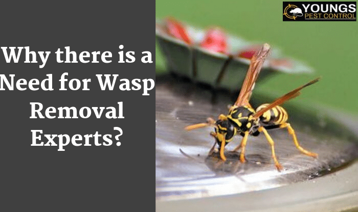 Wasp Removal Experts