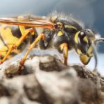 Partington Wasp Removal Services