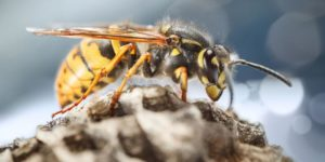 Wasp Removal Treatment