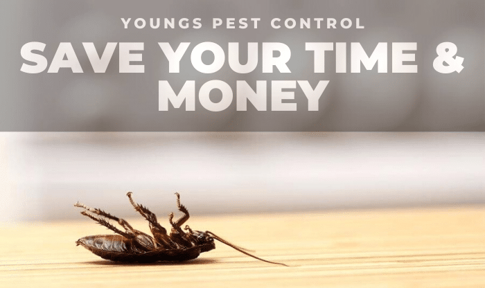 Youngs Pest Control