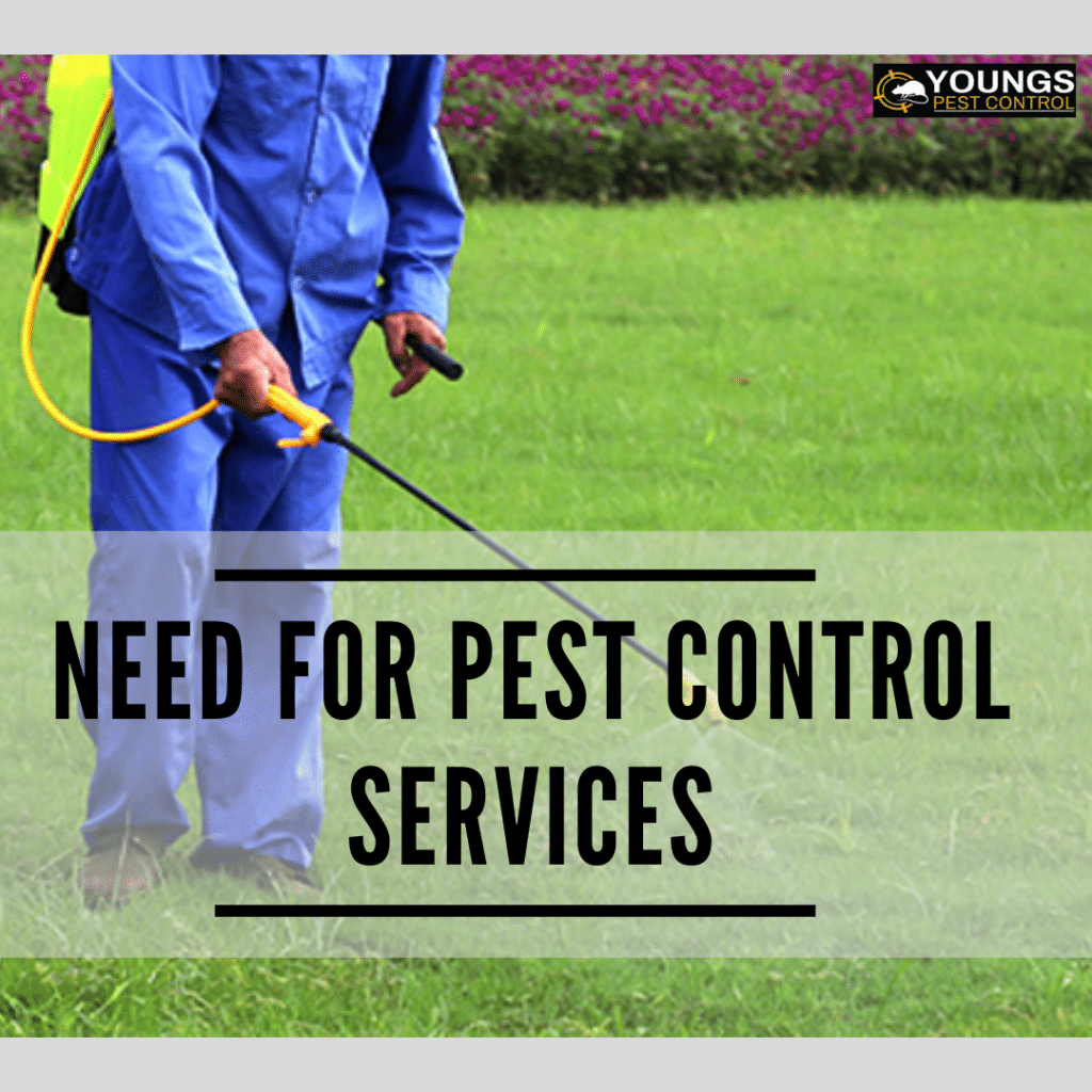 Need For Pest Control Services