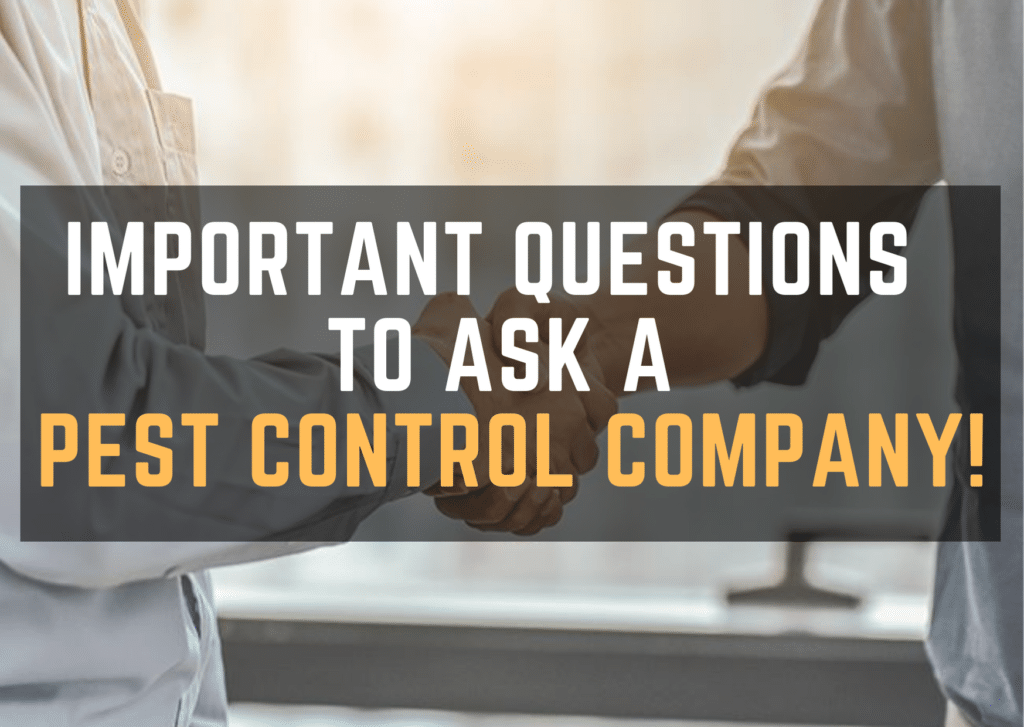 Important Questions to Ask a Pest Control Company!