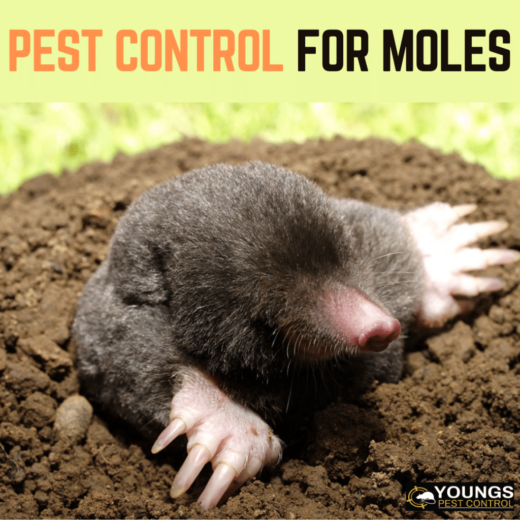 Pest Control for Moles